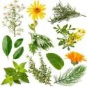 Plantas, Flores y Hierbas